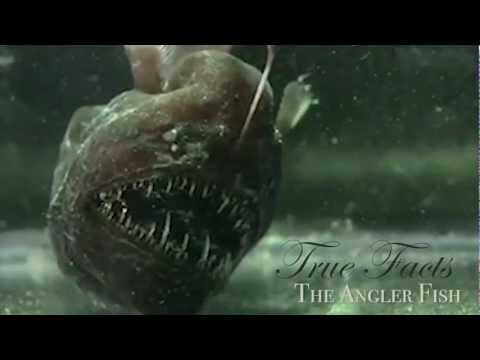 「鮟鱇魚的真相」- True Facts About The Angler Fish