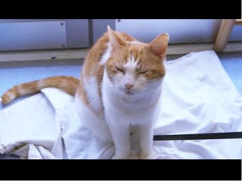 貓咪肢體語言大解謎