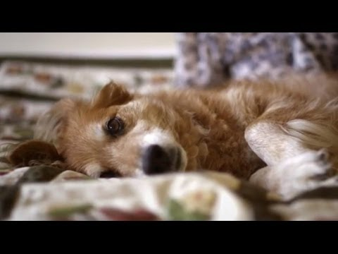 「有沒有癌症?狗狗告訴你!」- Dogs Can Smell Cancer: Secret Life of Dogs