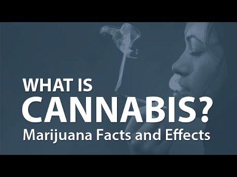 「大麻的真相」- Marijuana Facts and Effects