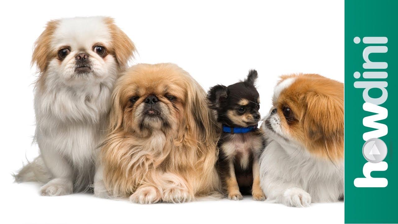 新手養狗狗:如何選擇適合自己的狗?