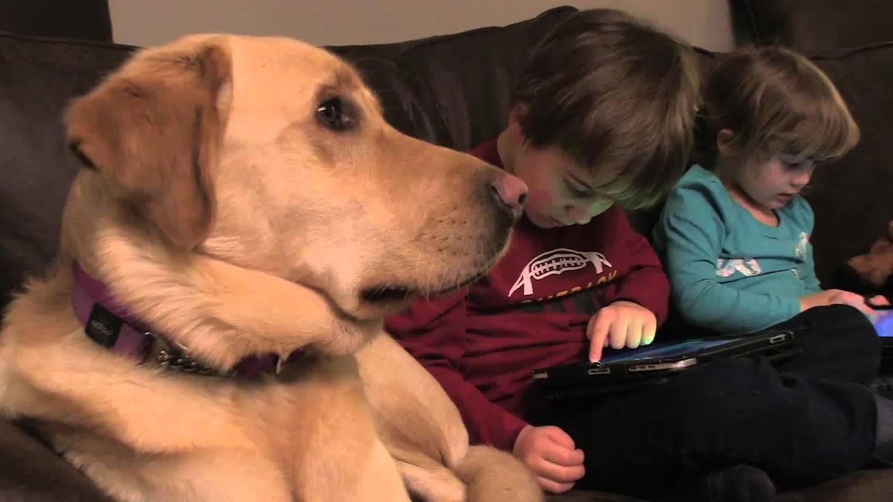 重拾幸福--自閉症小男孩與他的狗狗