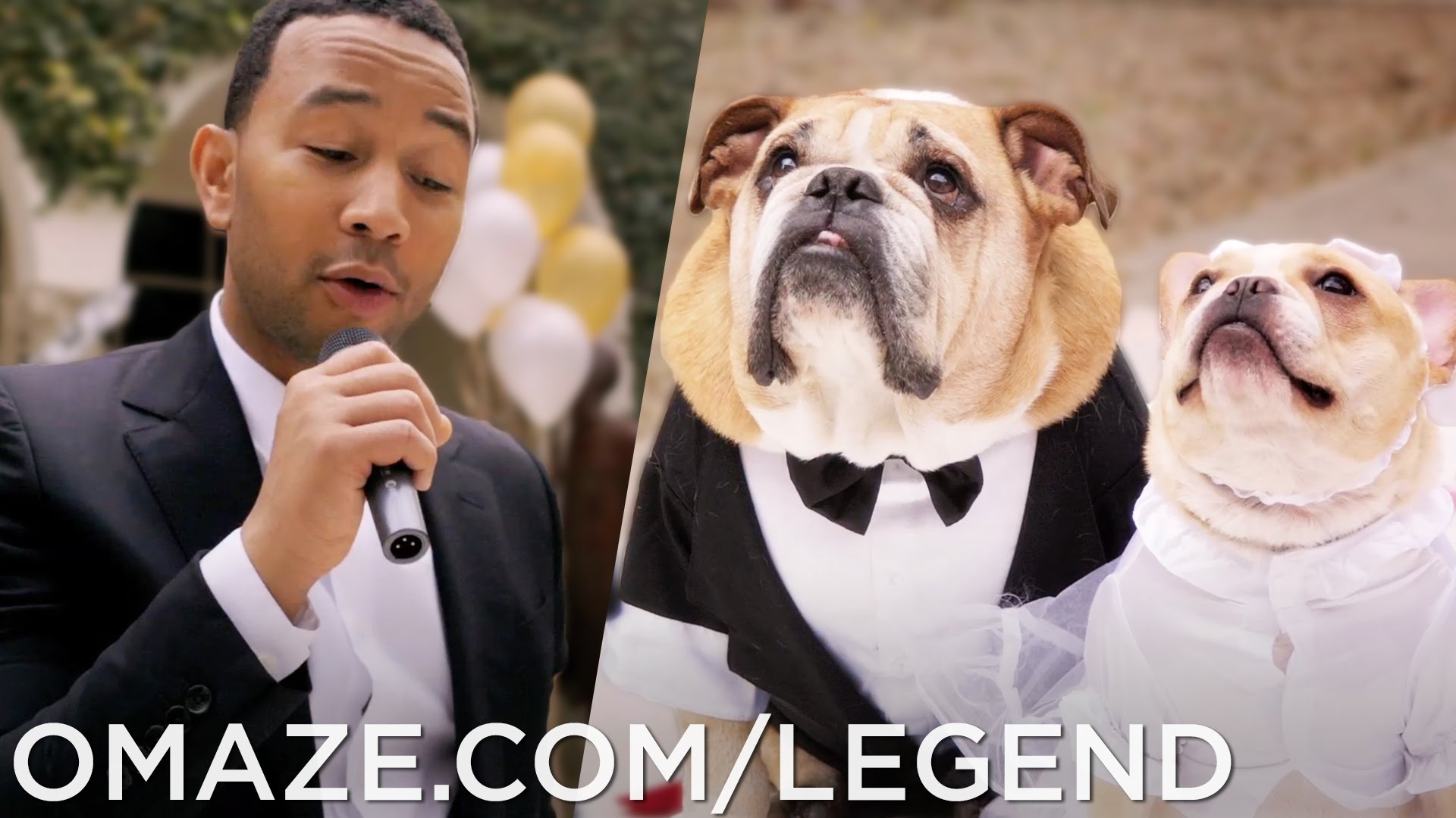 「John Legend 到你家深情演唱《All of Me》」- John Legend Dog Wedding (for Charity)