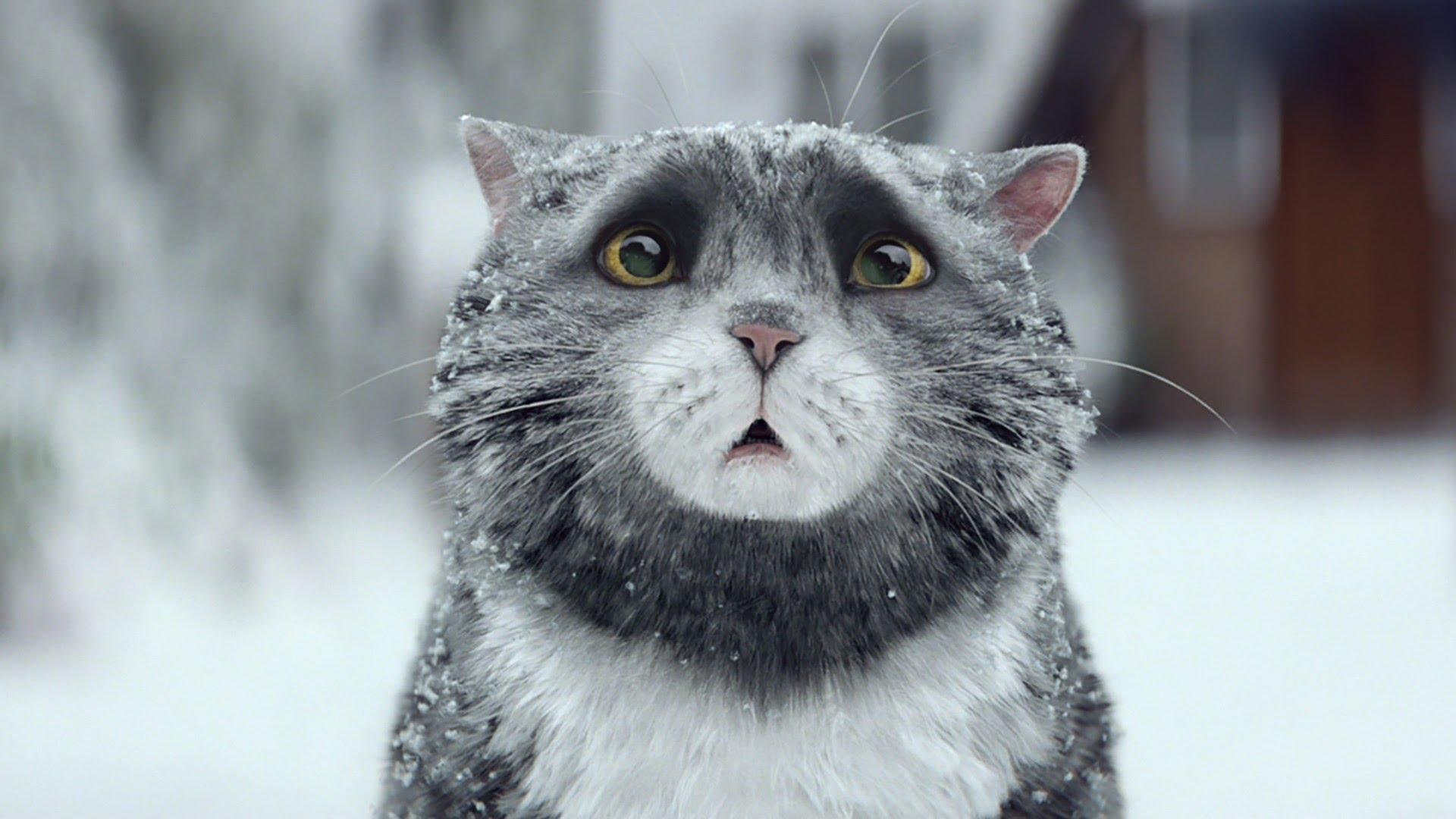 暖心耶誕廣告:糊塗貓莫可的聖誕大災難