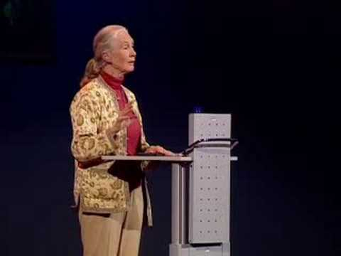 「Jane Goodall:人類與動物如何共存」- How Humans and Animals Can Live Together