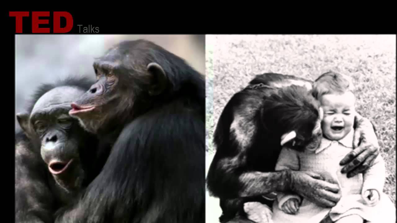 「Carl Safina:動物們想些什麼?」- What Are Animals Thinking and Feeling?