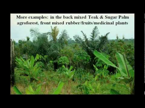 「Willie Smits:如何讓雨林復原」- How to Restore a Rainforest