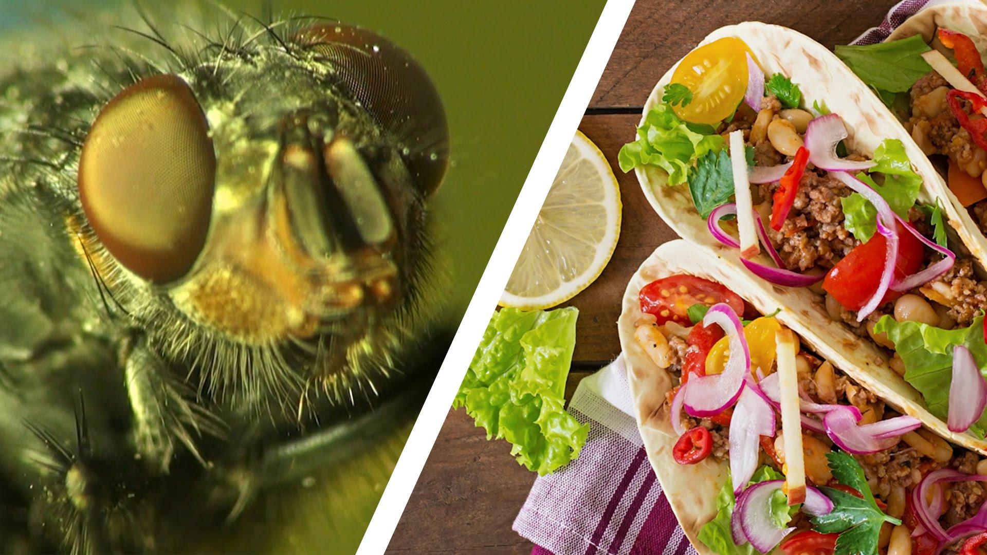 關於蒼蠅,你不可不知的噁心真相
