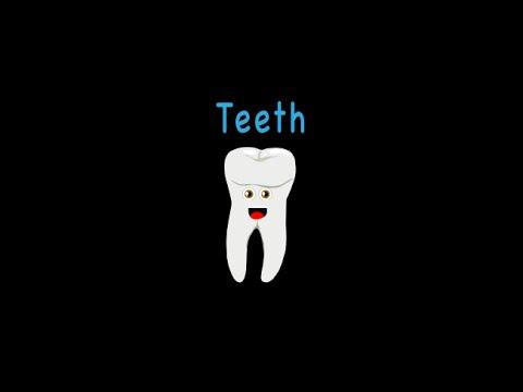 一首歌教你身體器官:牙齒篇