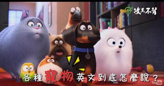 寵物犬英文名稱大集合!