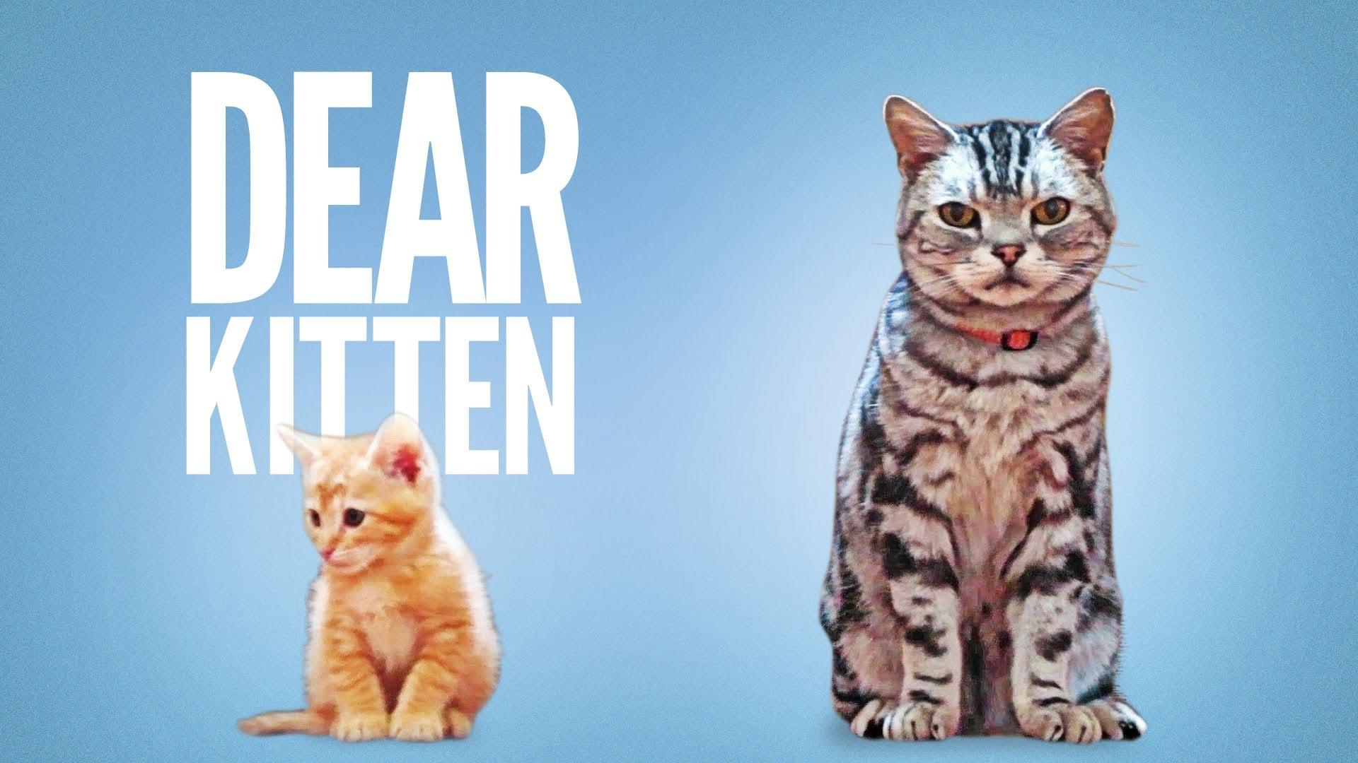 「【超療癒貓食廣告】親愛的小貓,讓大哥我來告訴你...」- Dear Kitten