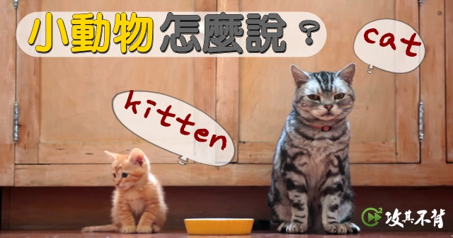 小貓不是『small cat』!這些動物『小』時候英文這樣說!