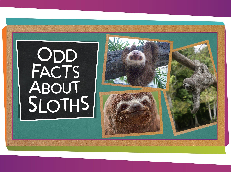 「呆萌樹懶大揭密:原來牠們一點都不懶?!」- Odd Facts about Sloths
