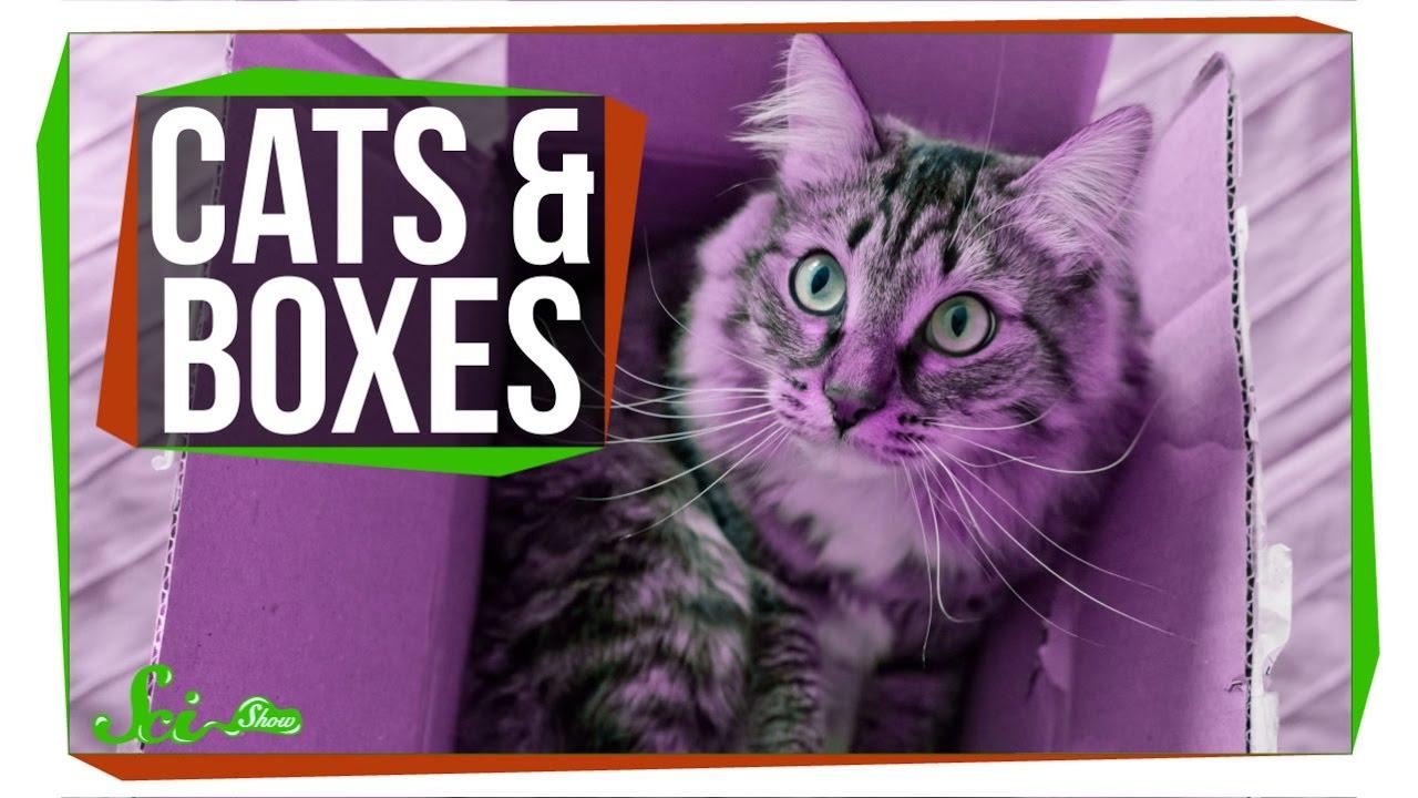 「科學大哉問:為什麼貓咪都喜歡躲進箱子呢?」- Why Do Cats Love Boxes?