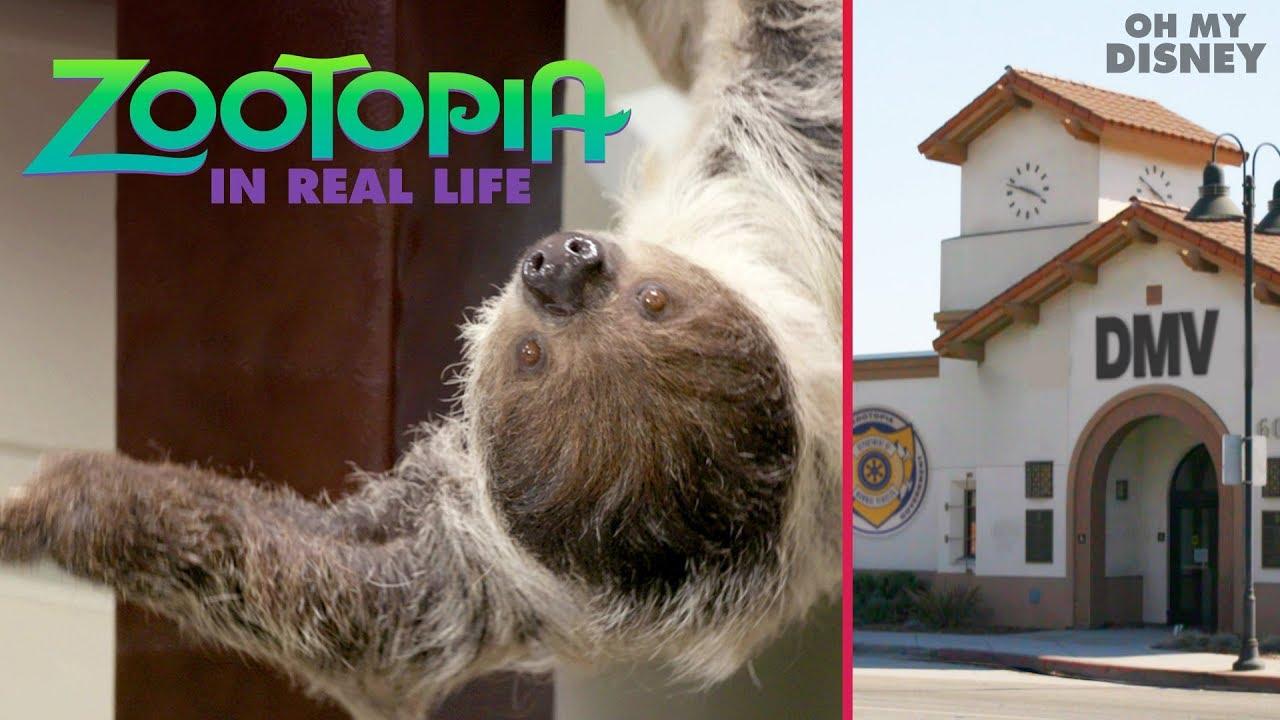 你沒看錯!《動物方城市》的樹懶公務員真的跑到現實世界啦!