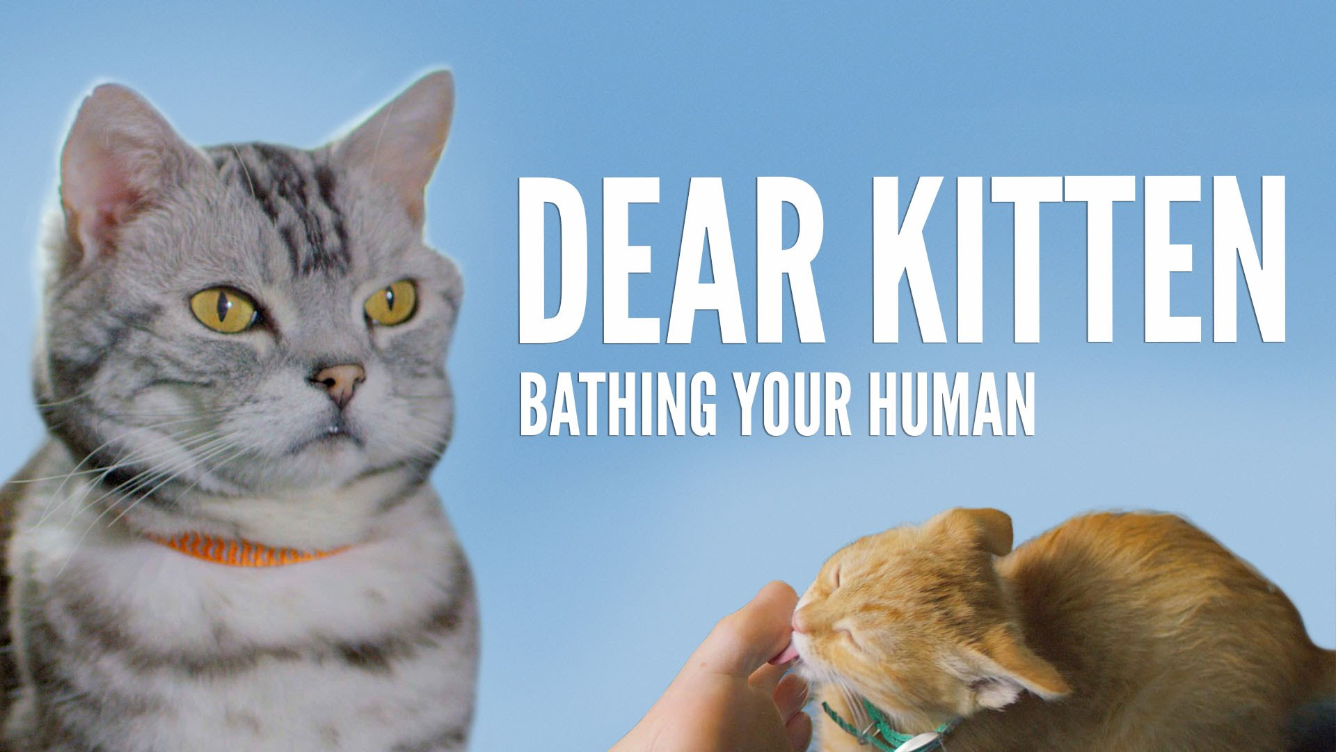 「【超療癒貓食廣告】親愛的小貓,家裡那隻髒兮兮的人類...」- Dear Kitten: Bathing Your Human