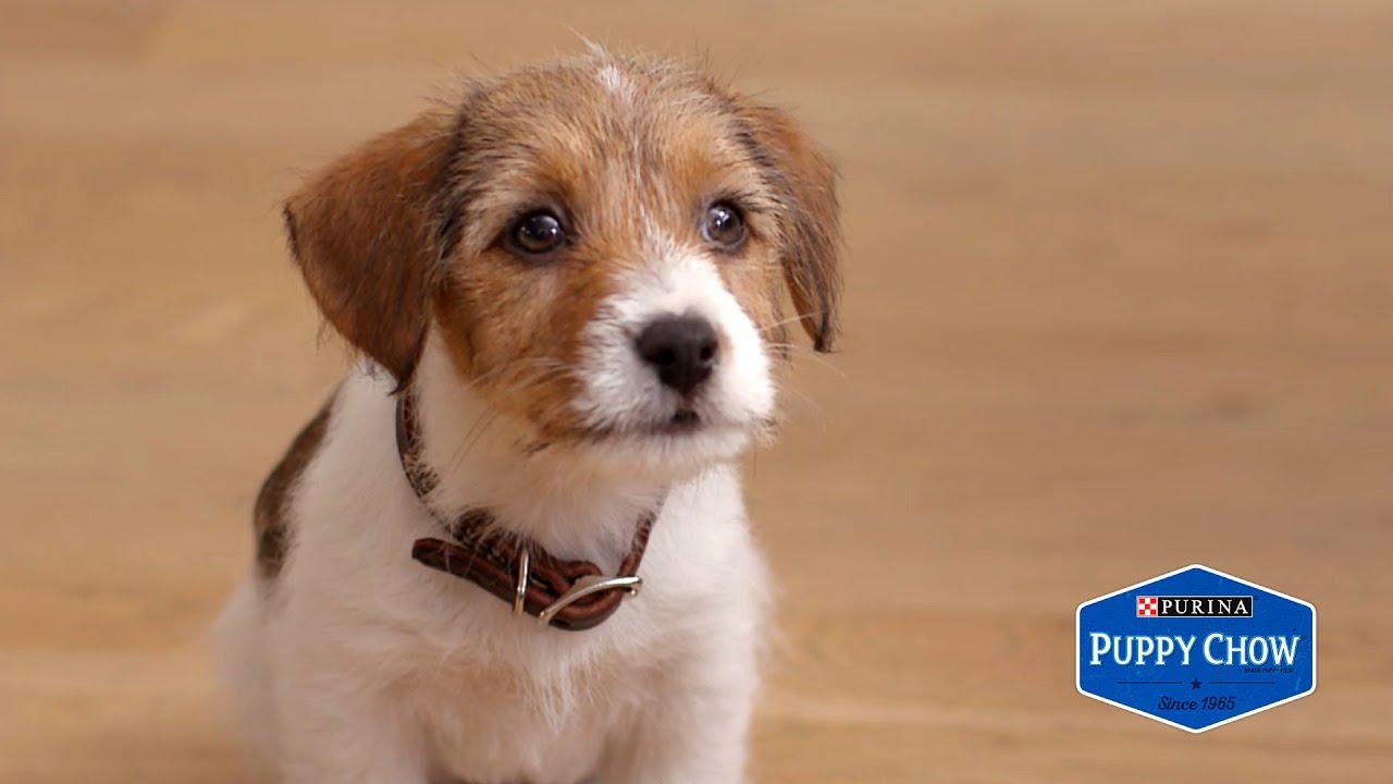 「焦慮又熱情的小狗狗與主人度過的一天」- When You Have an Anxious Puppy