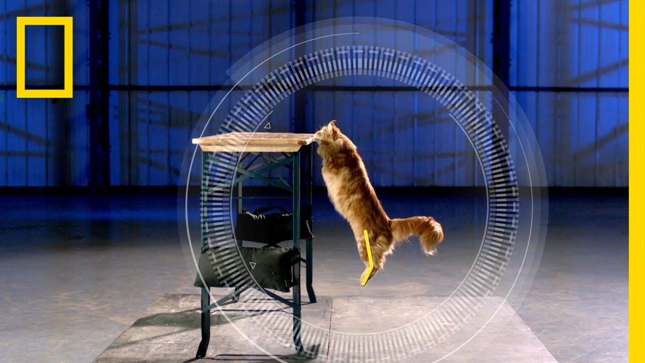 【無厘頭科學研究所】有沒有貓咪很笨的八卦?