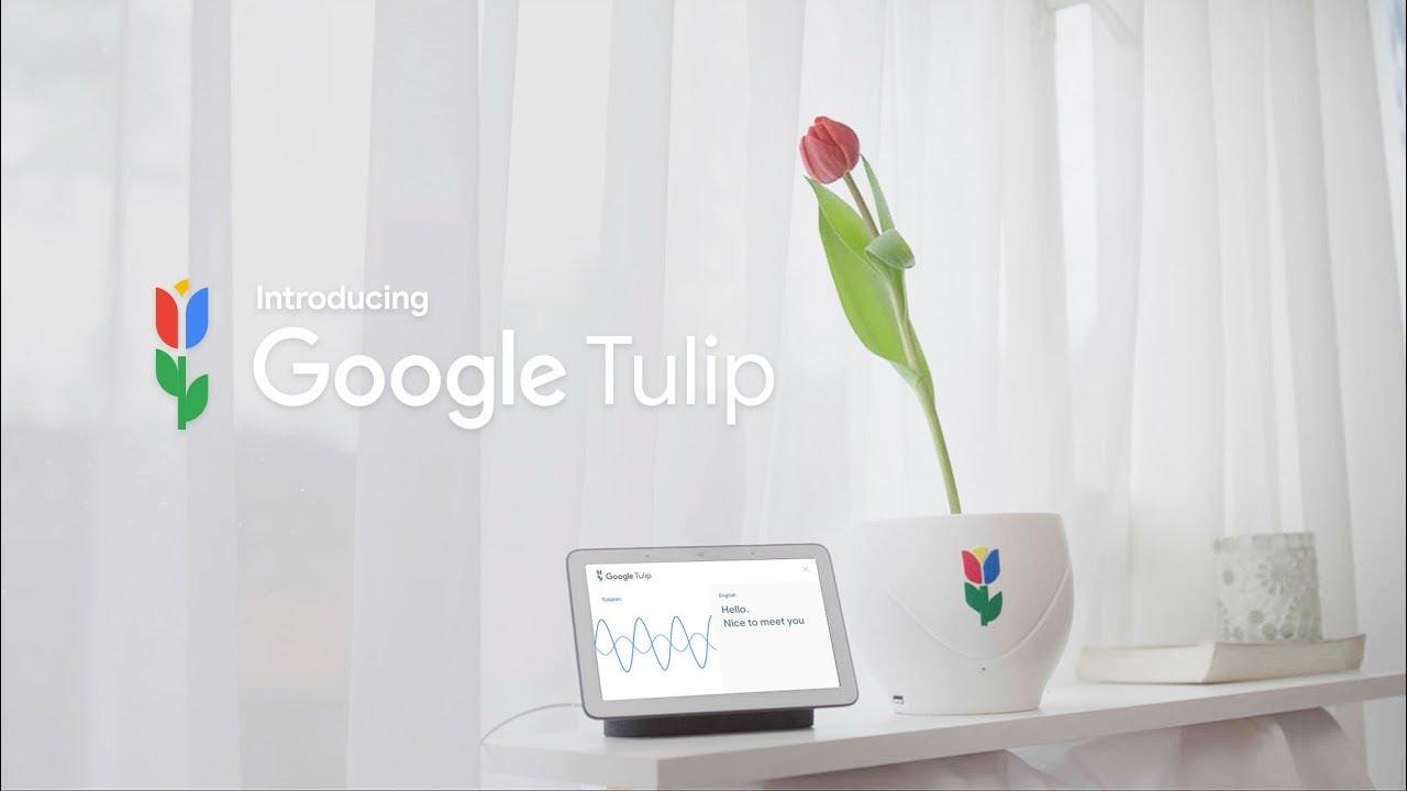 Google 全新產品 Google Tulip?!竟然可以跟植物說話?!