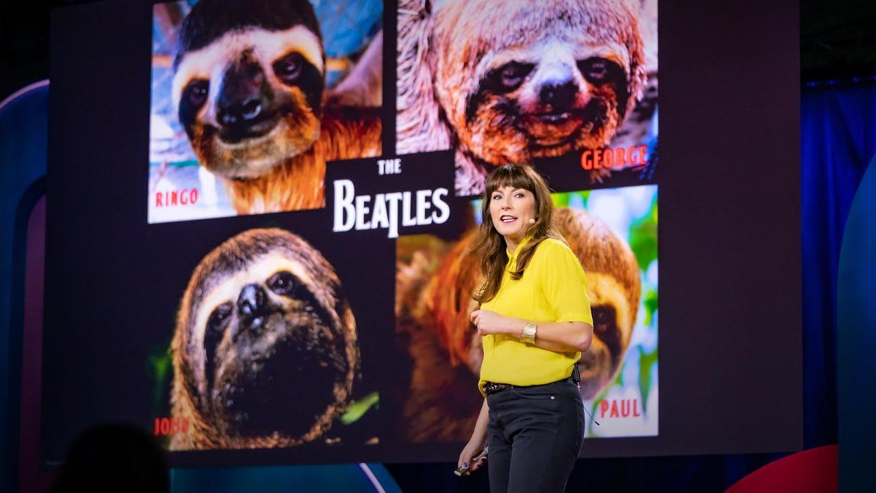 Lucy Cooke:樹懶!認識世界上最緩慢生物的奇異生活