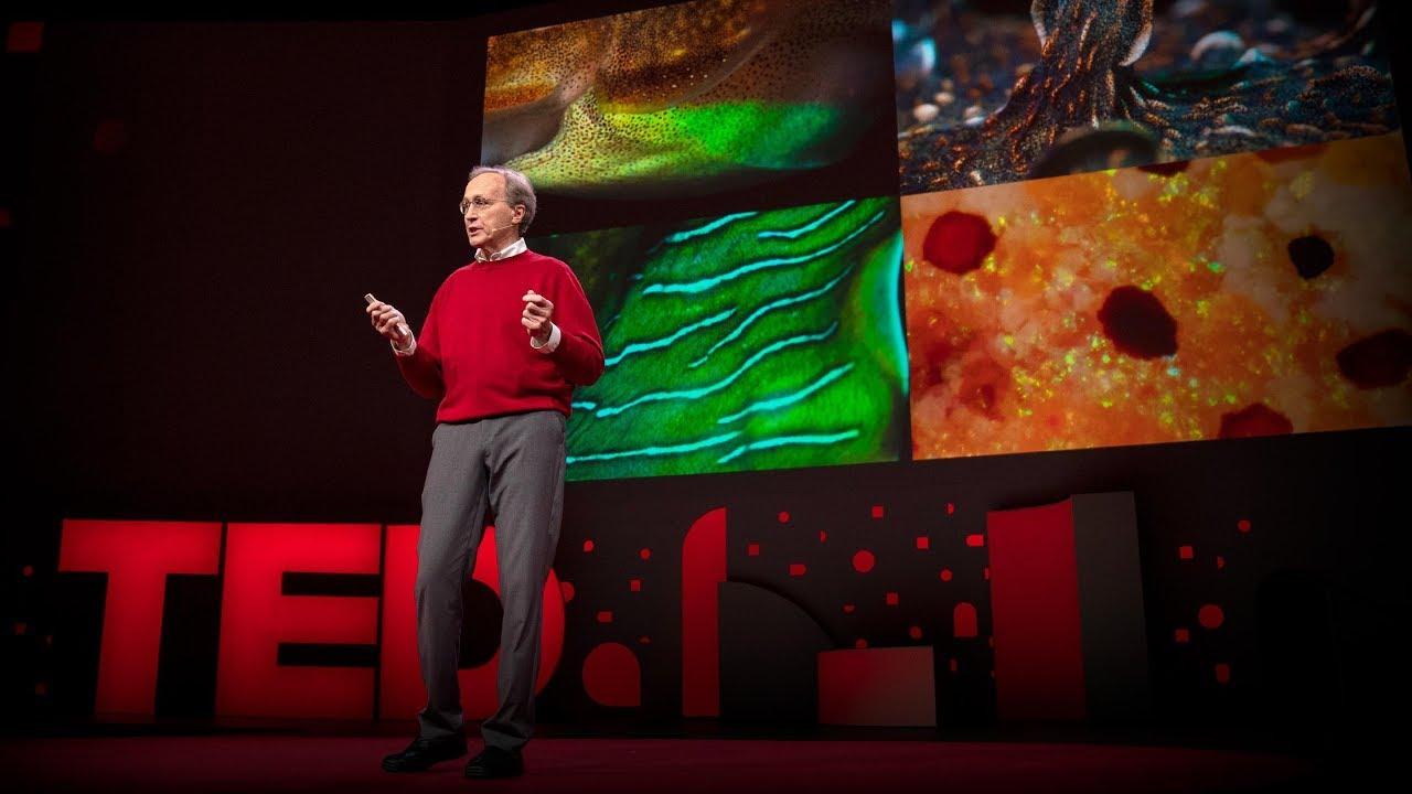 Roger Hanlon:章魚和其他頭足類生物神奇的大腦與變異皮膚