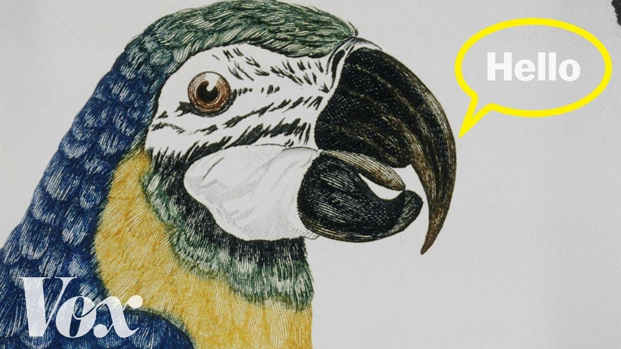 【科普小教室】鸚鵡為什麼會說話?