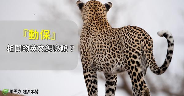 可愛的大貓就是要抱緊處理!來學學有關『動物保育』的單字